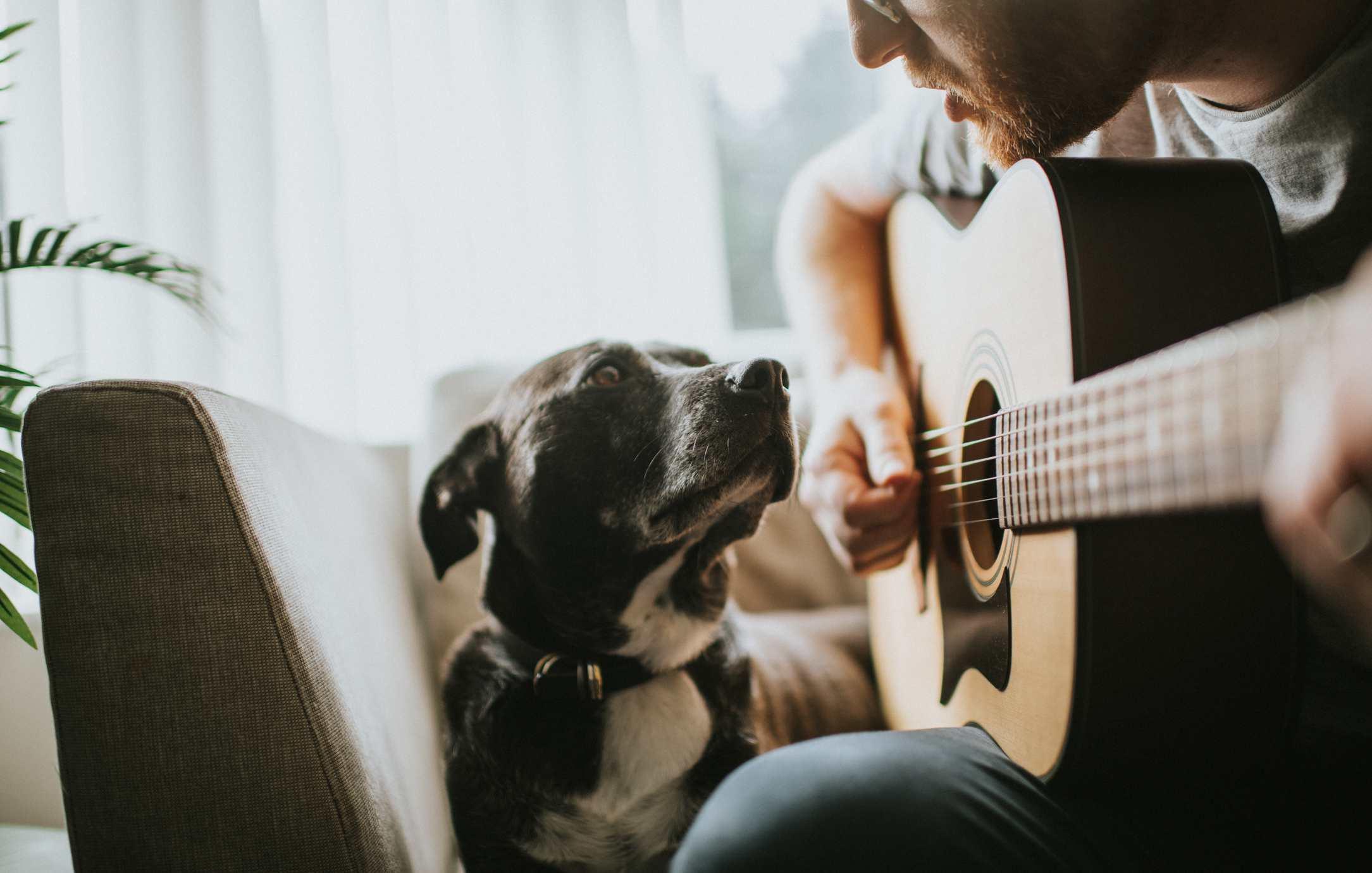 Hombre tocando una guitarra mientras un perro se sienta cerca escuchando.