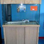 Completed DIY Oak Aquarium Cabinet