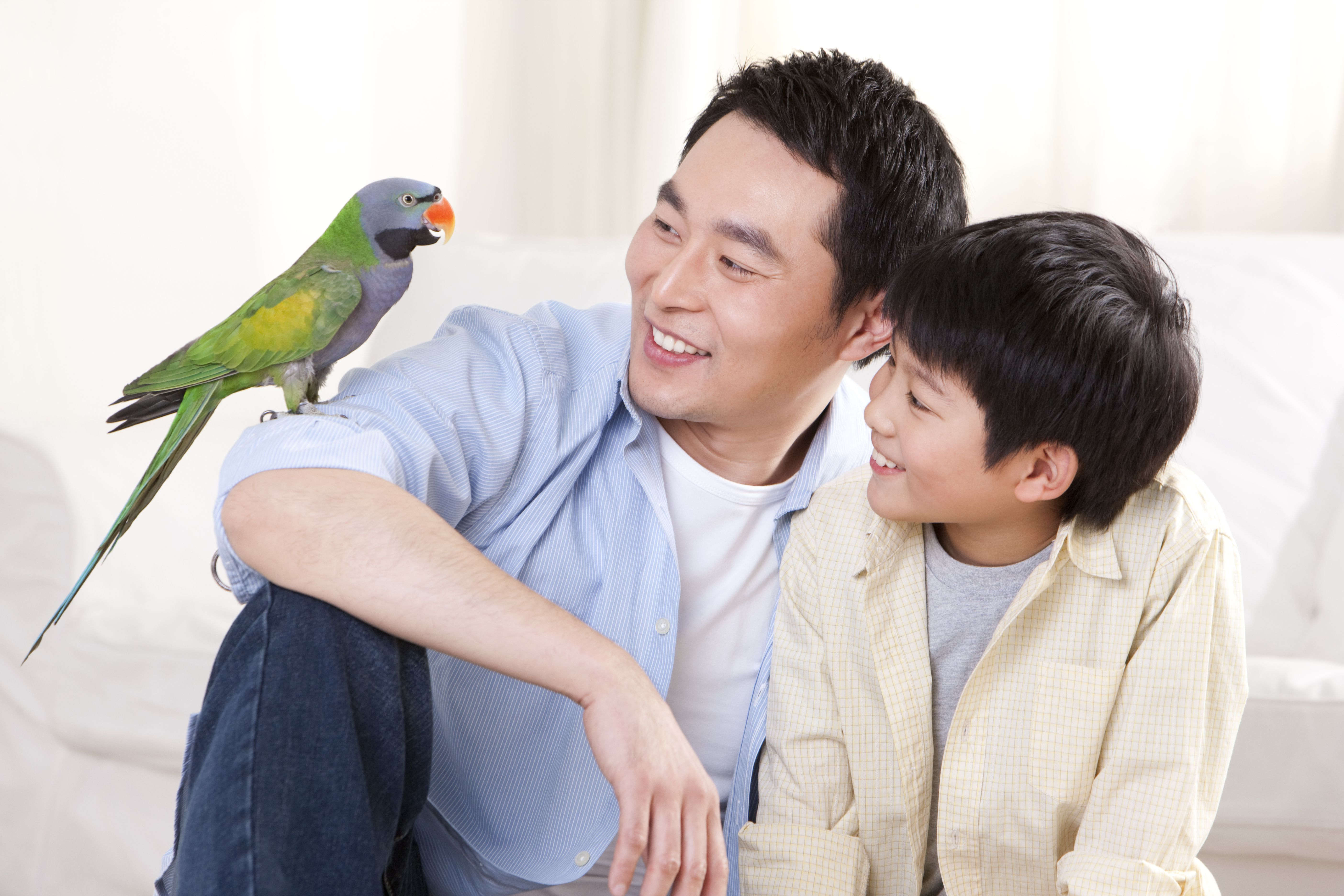 How to teach a parrot talk by thevetscare.com