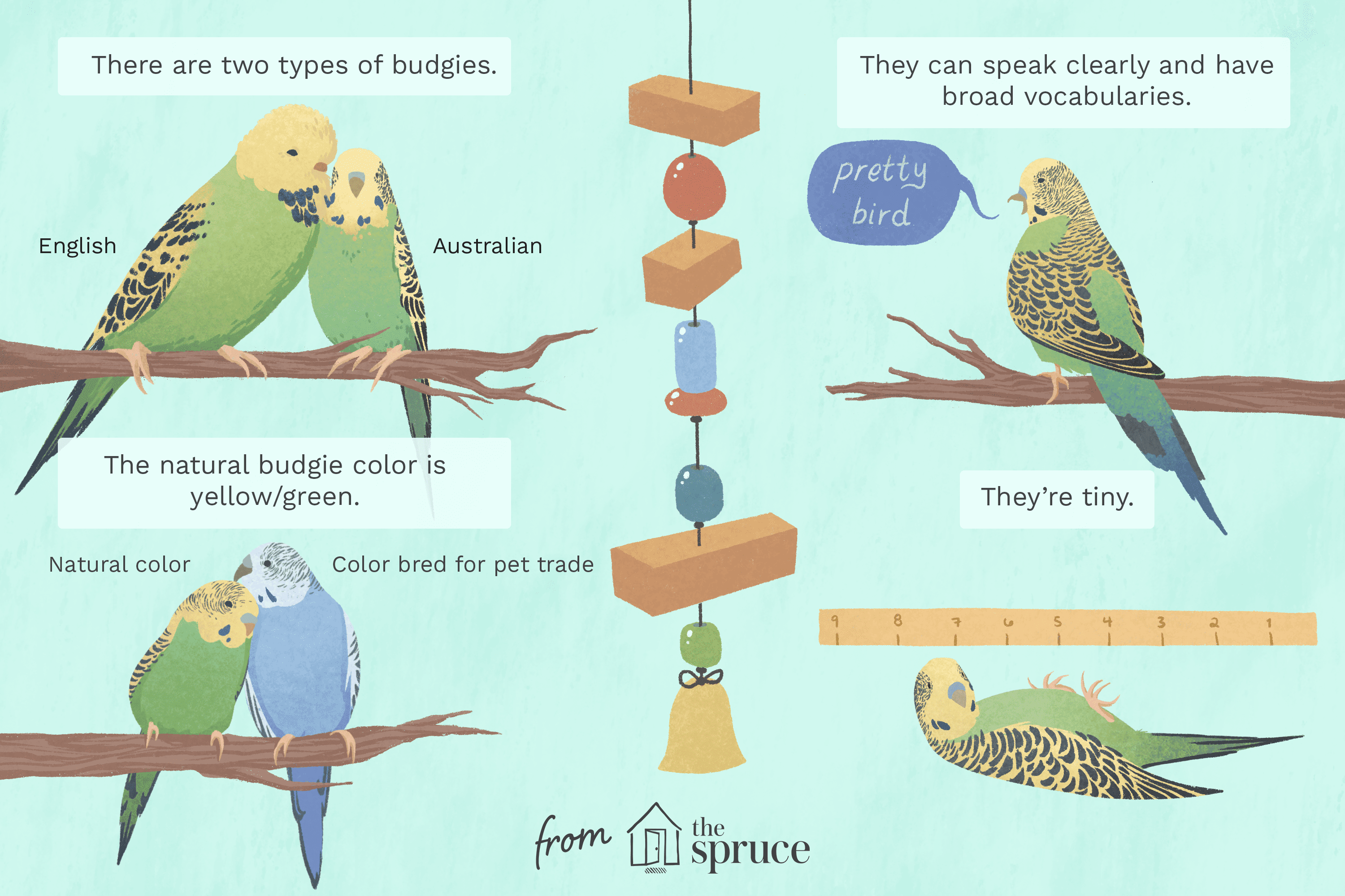 what is a budgies natural diet