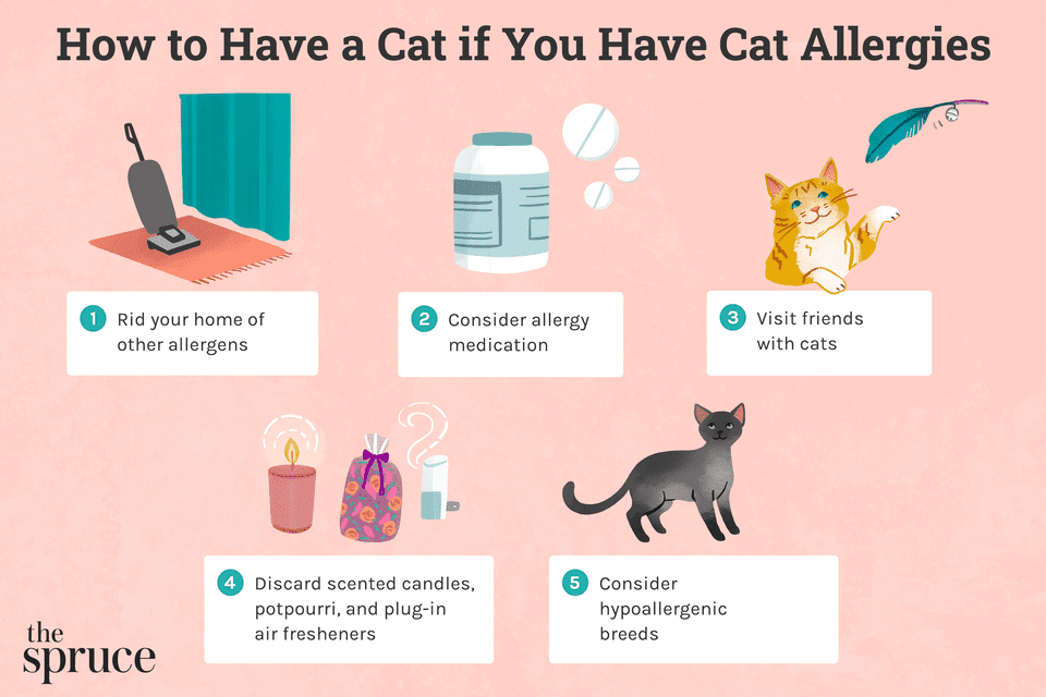How to Have a Cat if You Have Cat Allergies