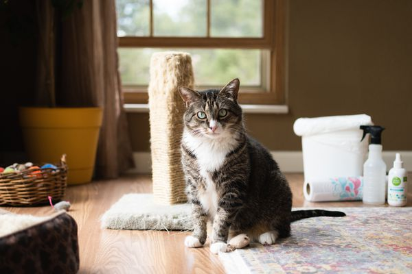 Gray and white cat in front of scratching pole and household items