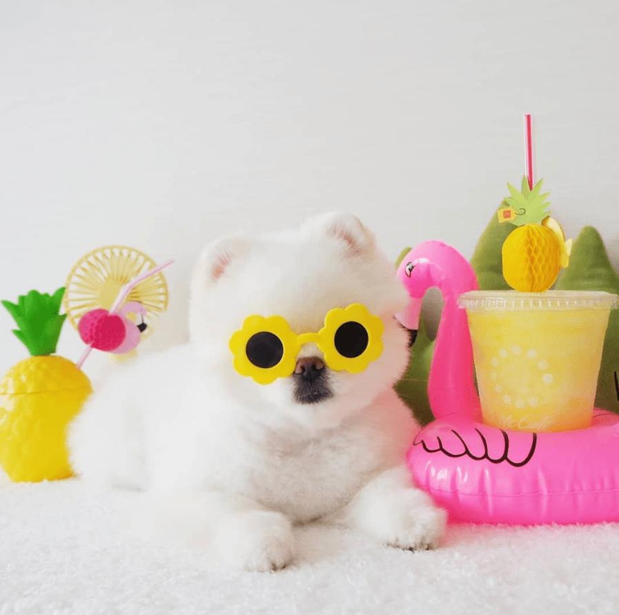 Mango con gafas de sol junto al flotador de flamenco y bebidas heladas
