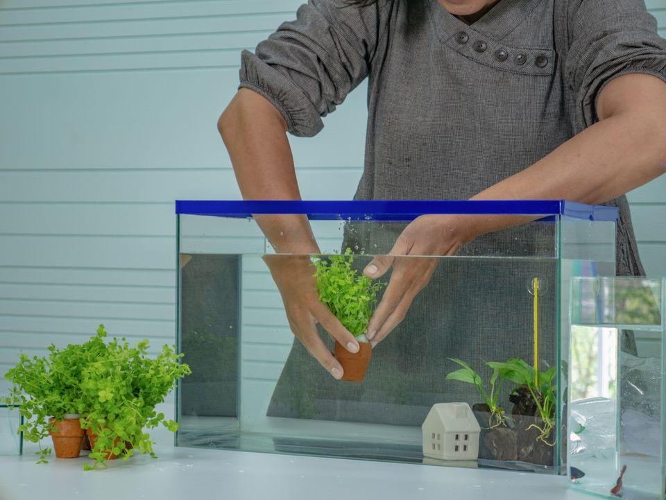 Woman setting up a small aquarium