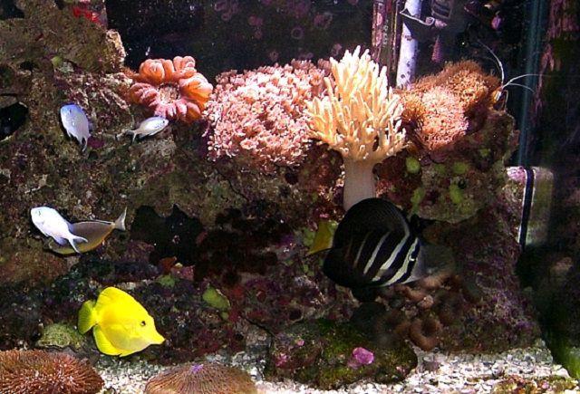 75g Reef Tank