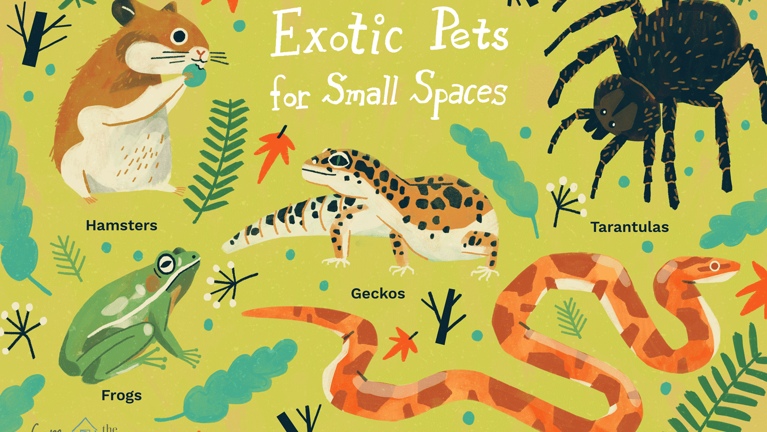 10 Best Exotic Pets For Small Spaces