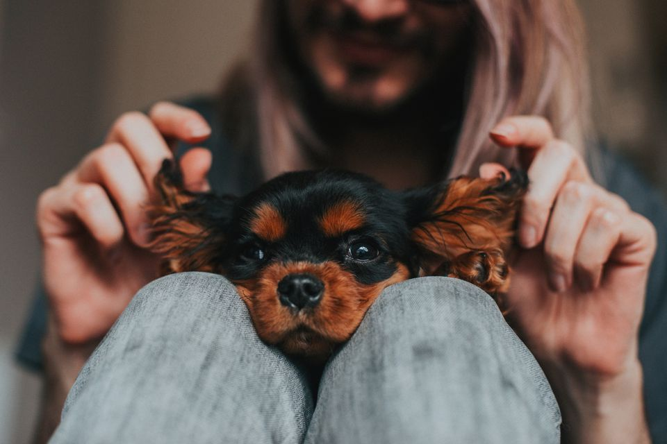 Man holding a puppy's ears