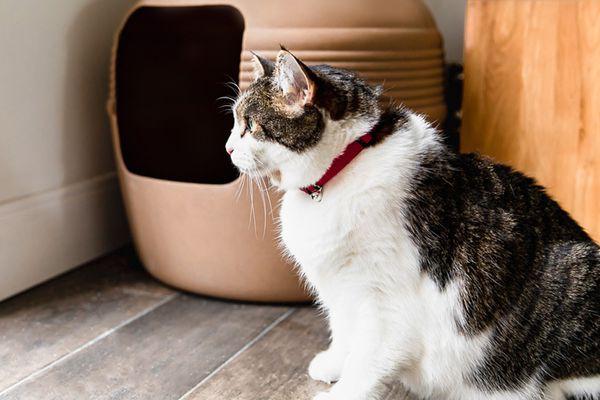 kitty outside of its litter box