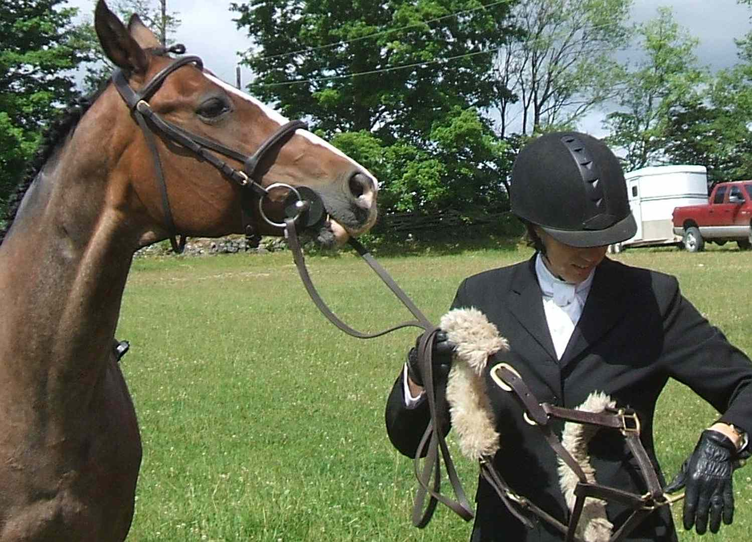 Horse with rider in English riding apparel