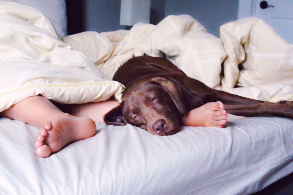 Dog Sleeping on the Bed