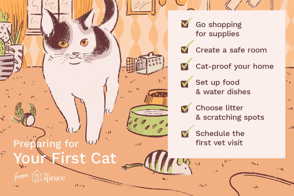 Ilustración de la lista de verificación para el primer gato
