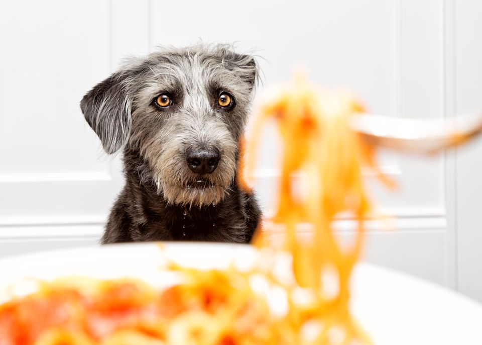 Un perro peludo negro en foco mirando un plato de pasta.