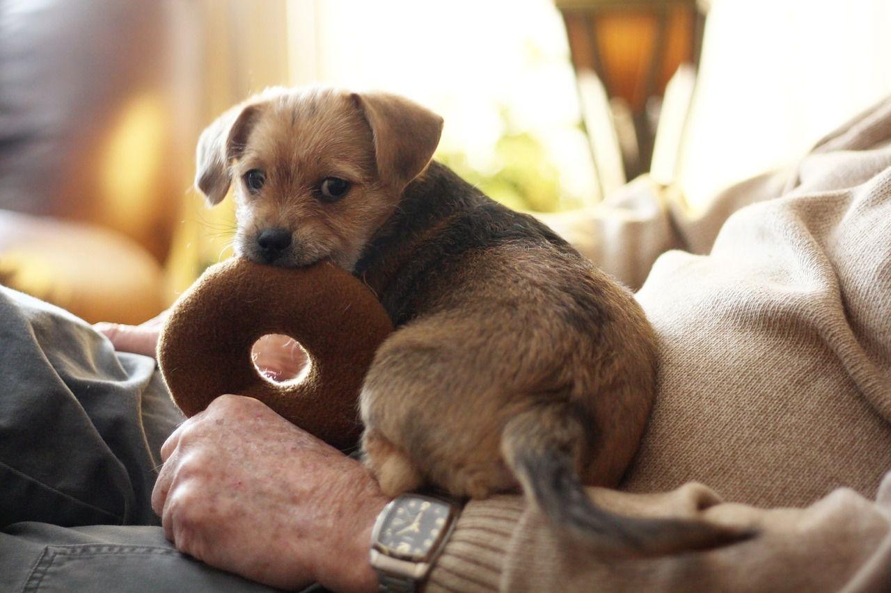 cachorro masticando un juguete