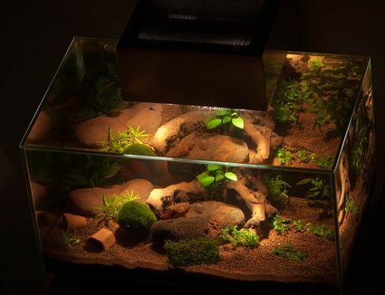 Aquarium in the dark