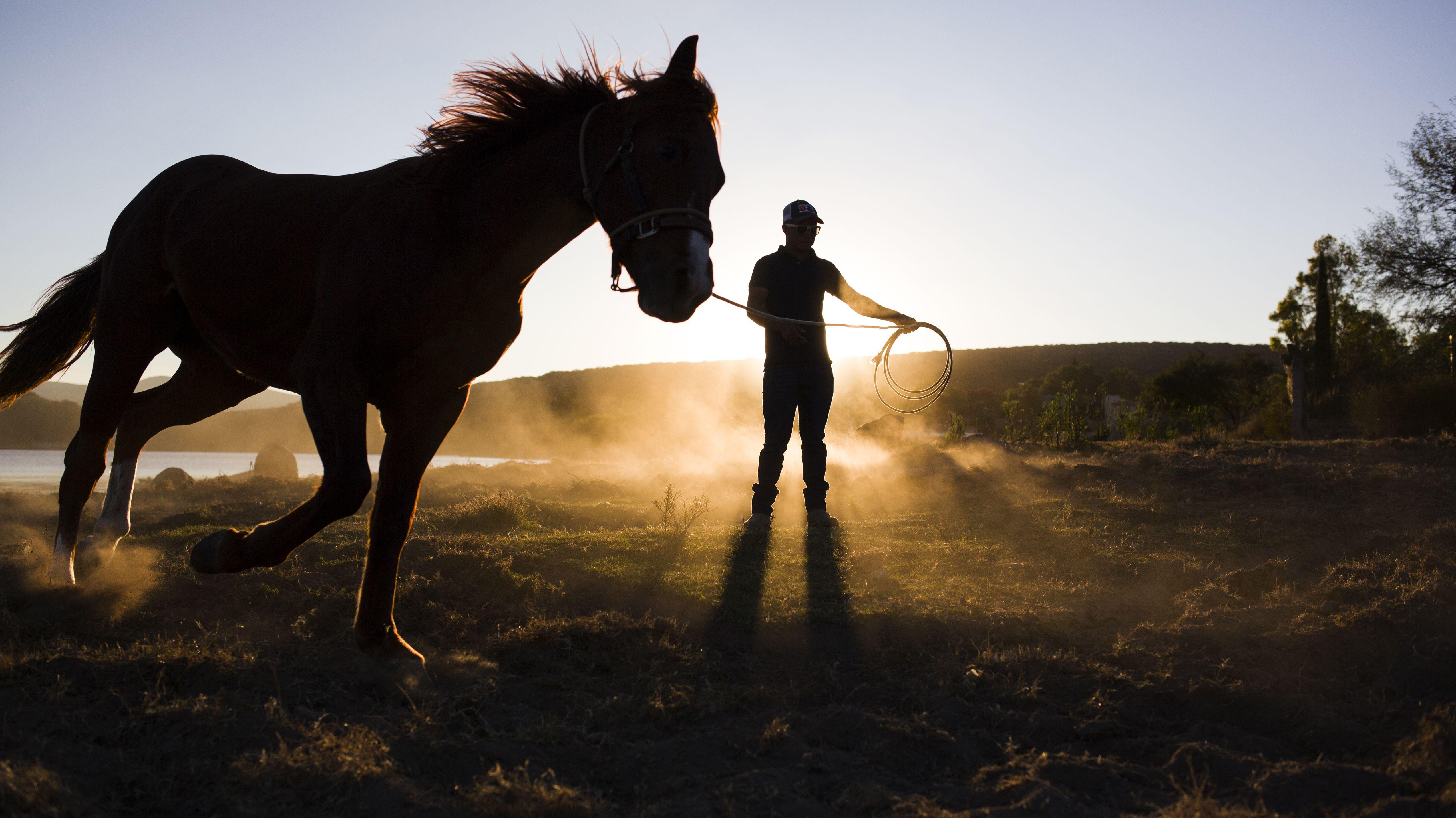 The Basics Of Training A Horse