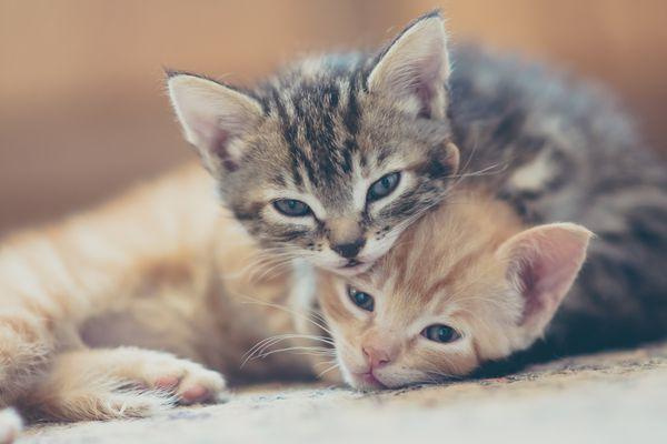 Two kittens cuddling
