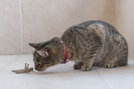 Insects That Are Toxic to Cats (And a Few That Aren't)