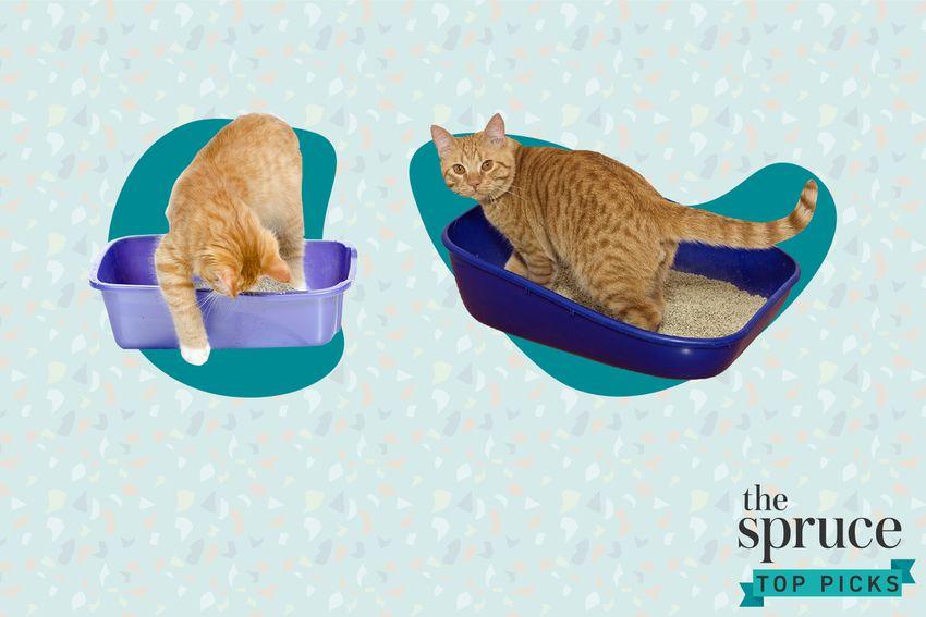 Best Cat Litters