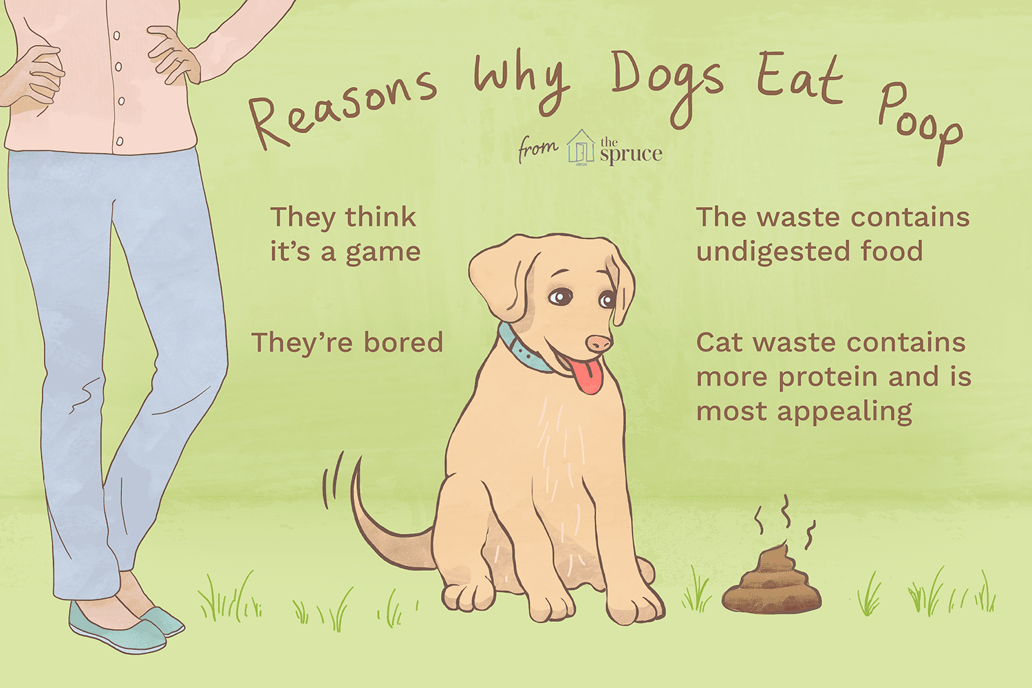 Reasons Why Puppies Eat Poop And How To Stop It