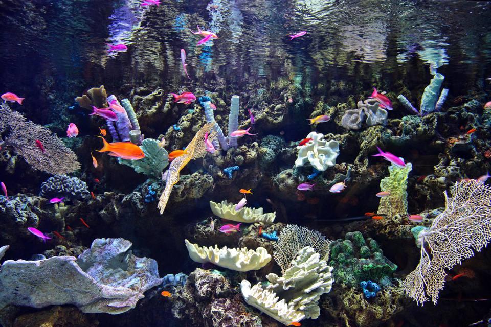 Coloridos peces tropicales y corales en acuario de tanque