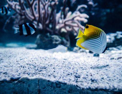 Close-Up Of Fishes Swimming In Aquarium