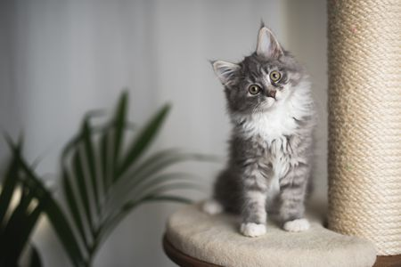 The Top Reasons To Keep Cats Indoors
