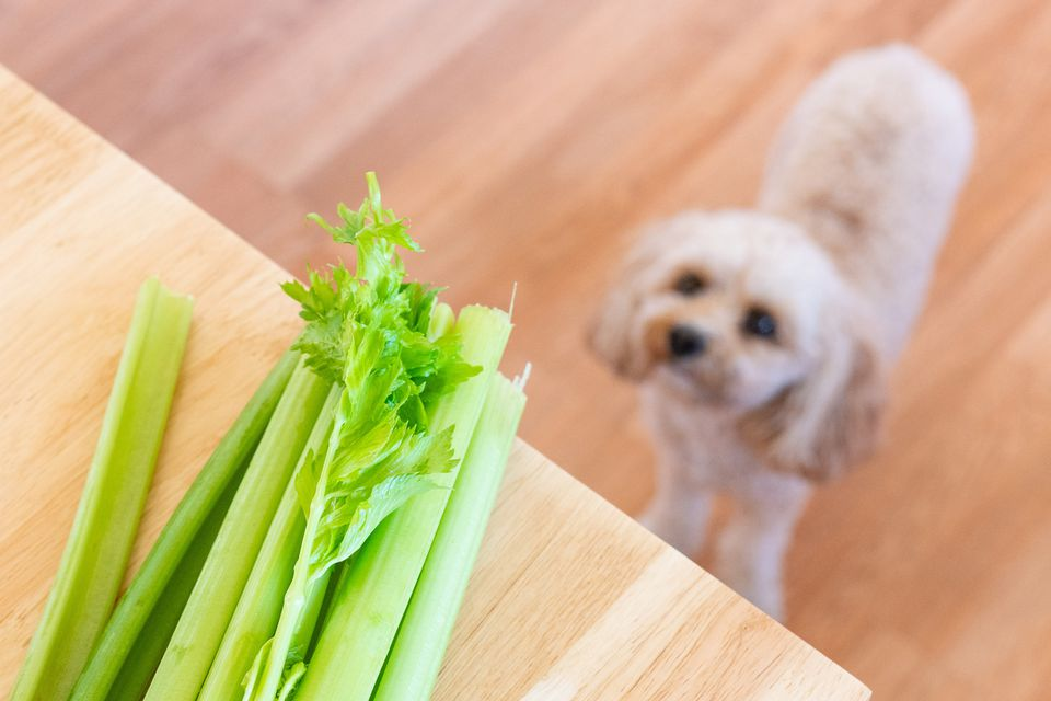 Celery stalks on cutting board with dog looking up at celery