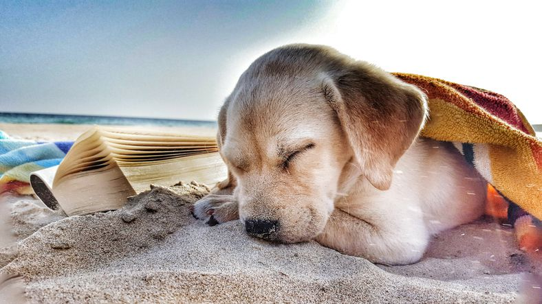 puppy sleeping on the beach