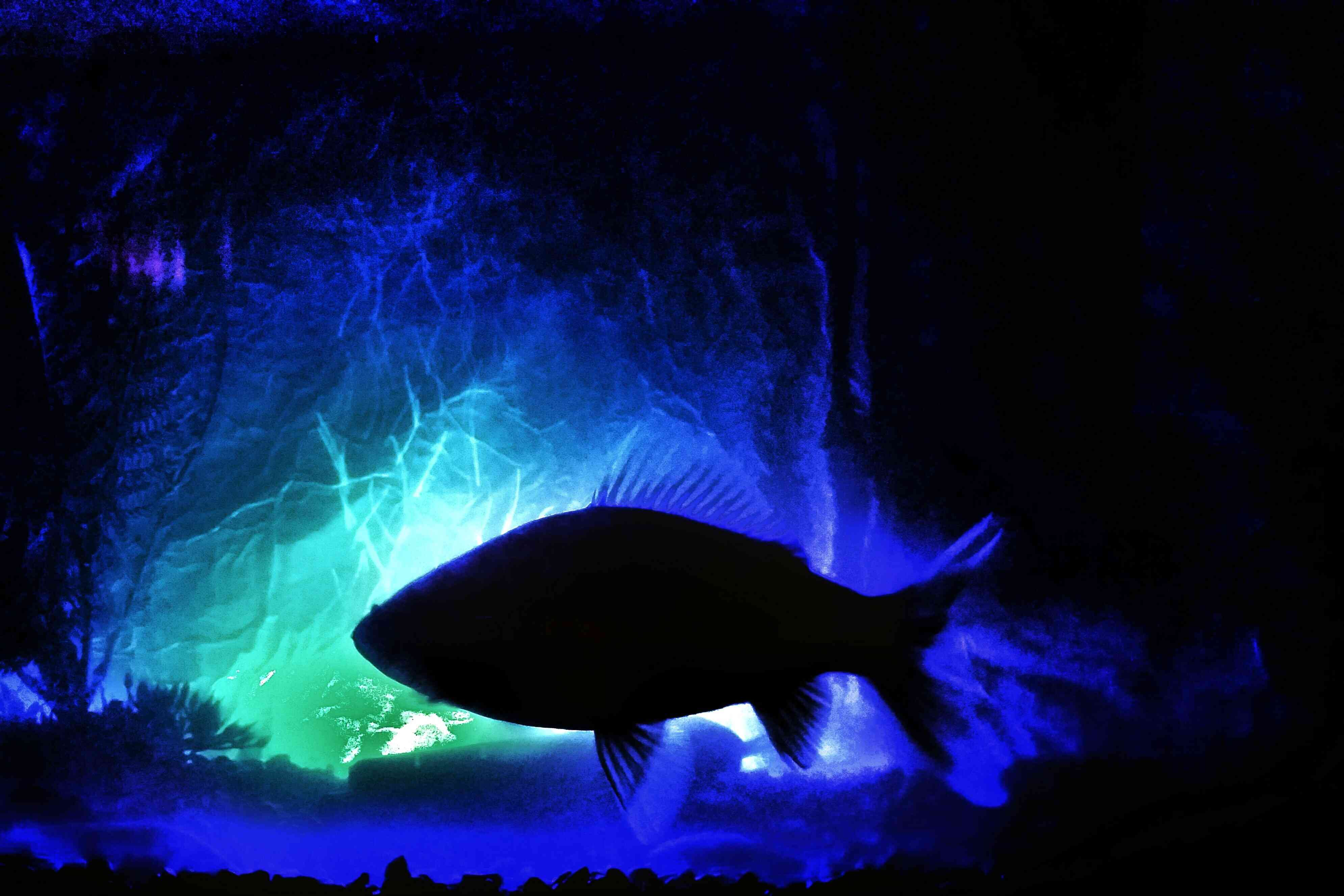 LED aquarium lighting that's both dynamic and dramatic
