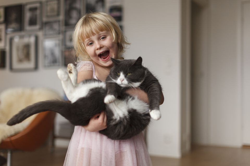 Grey and white cat being held by a little girl