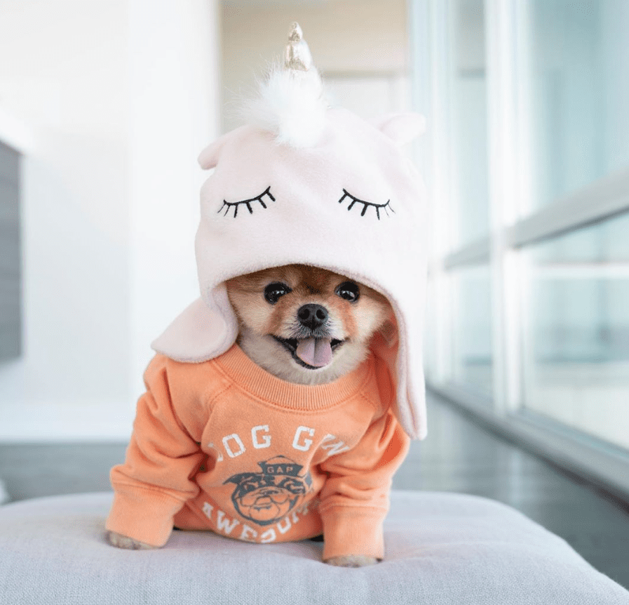 JiffPom in unicorn hat.