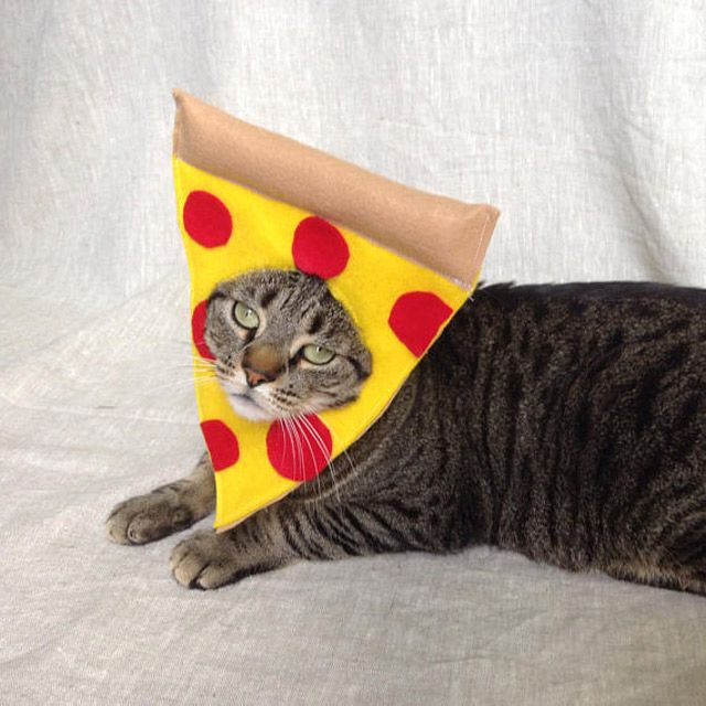 15 Purrfect Halloween Costumes For Your Cat