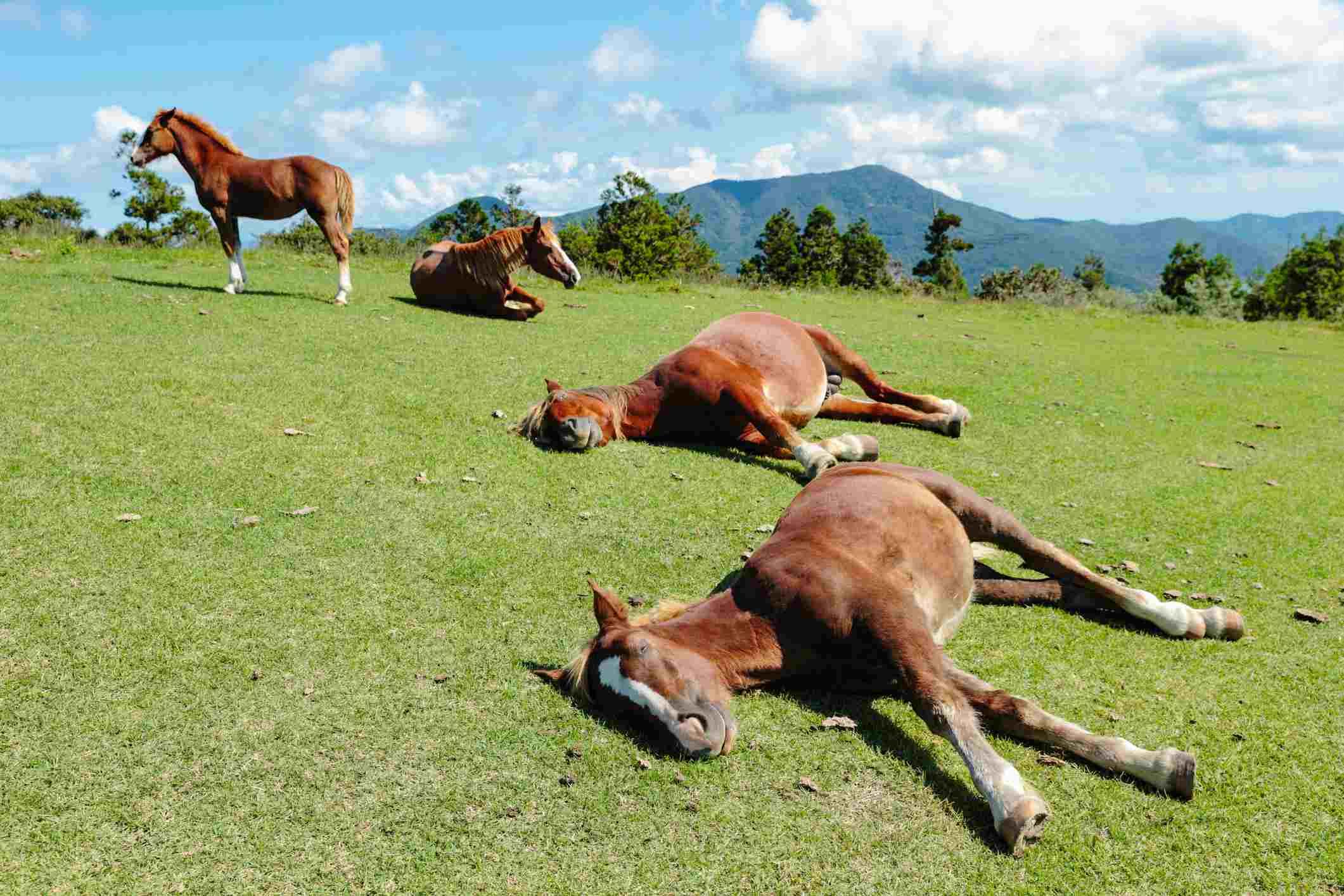 Familia feliz caballo