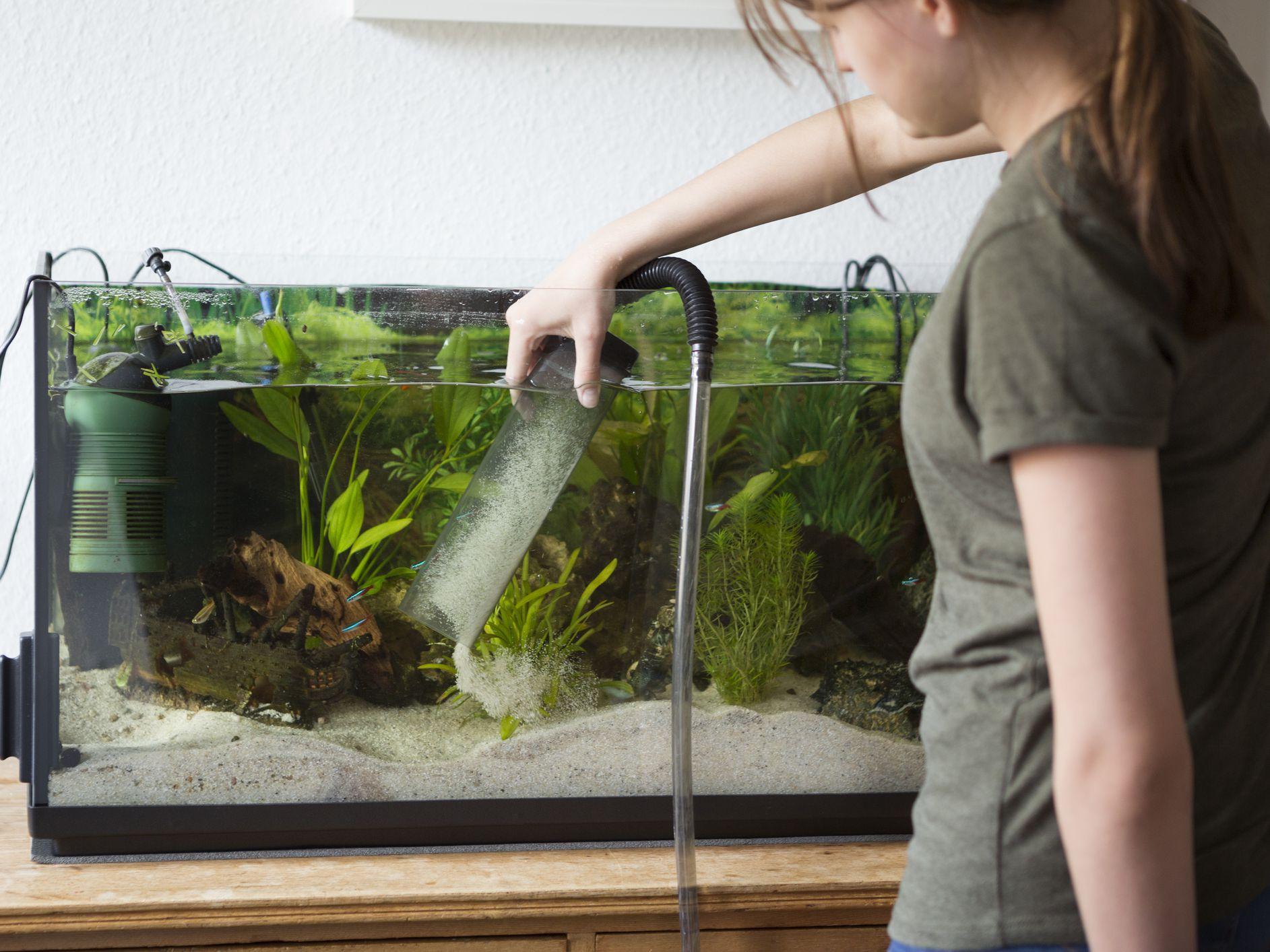 Should You Vacuum Your Aquarium Gravel