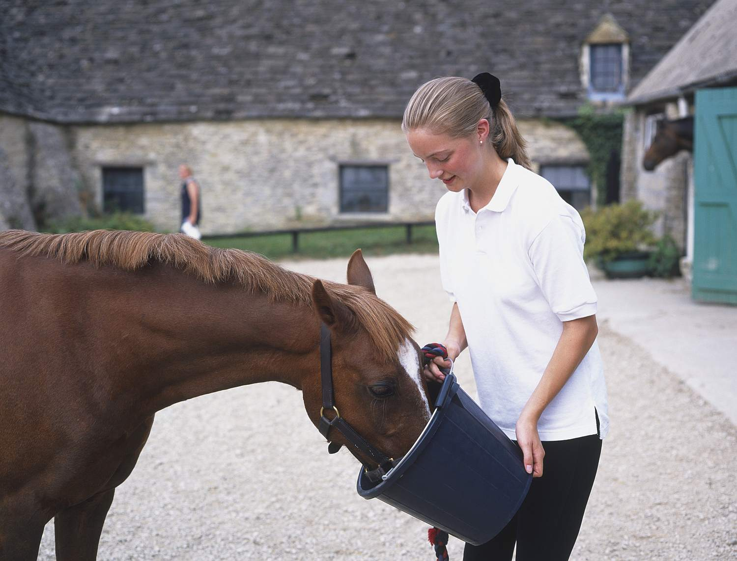 Girl feeding a brown horse out of bucket..