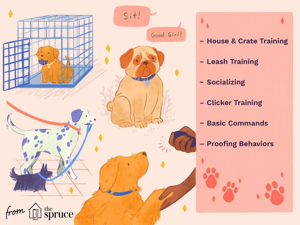how to train a dog illustration