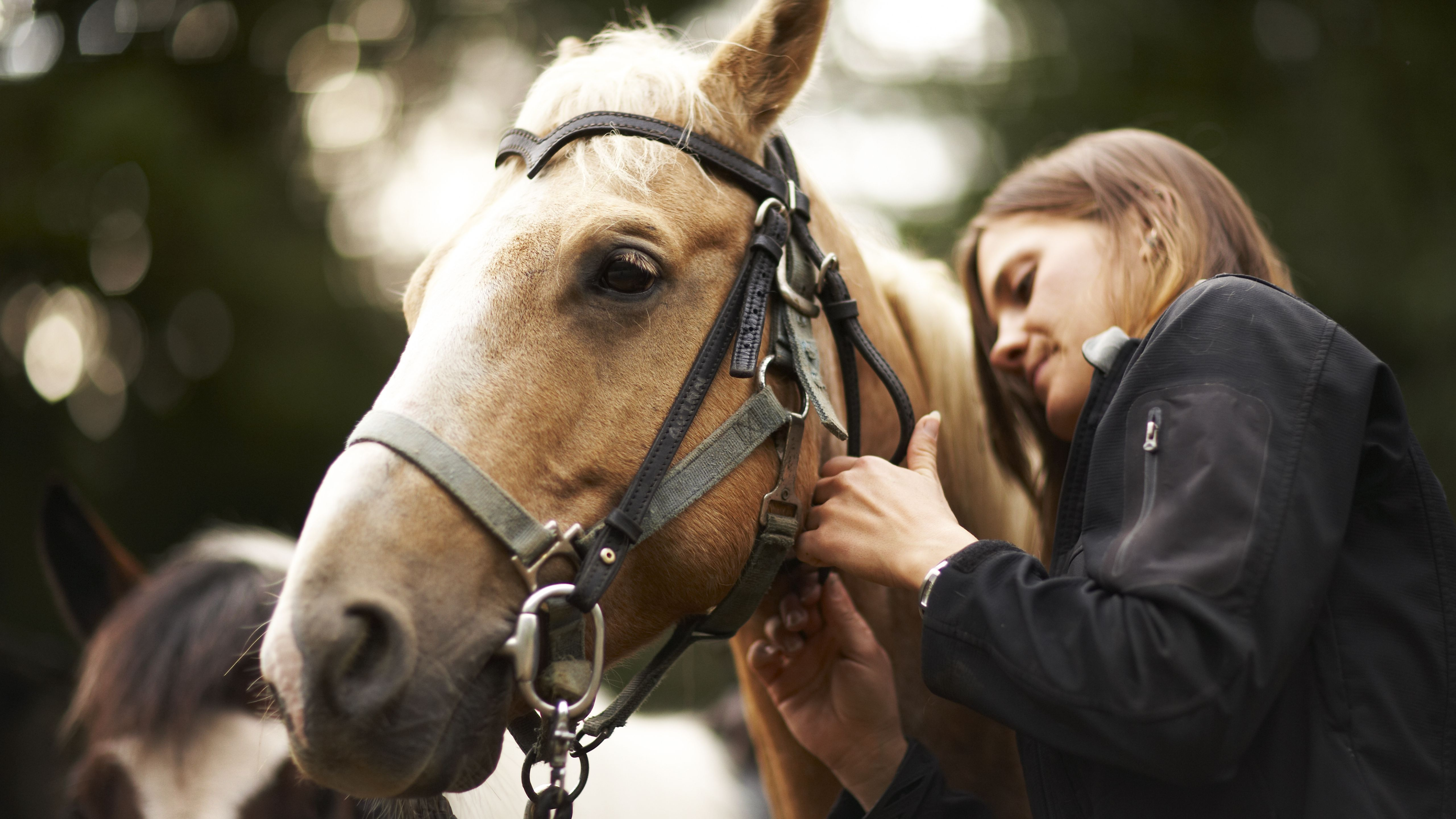 Advice on Choosing a Bit for Your Horse