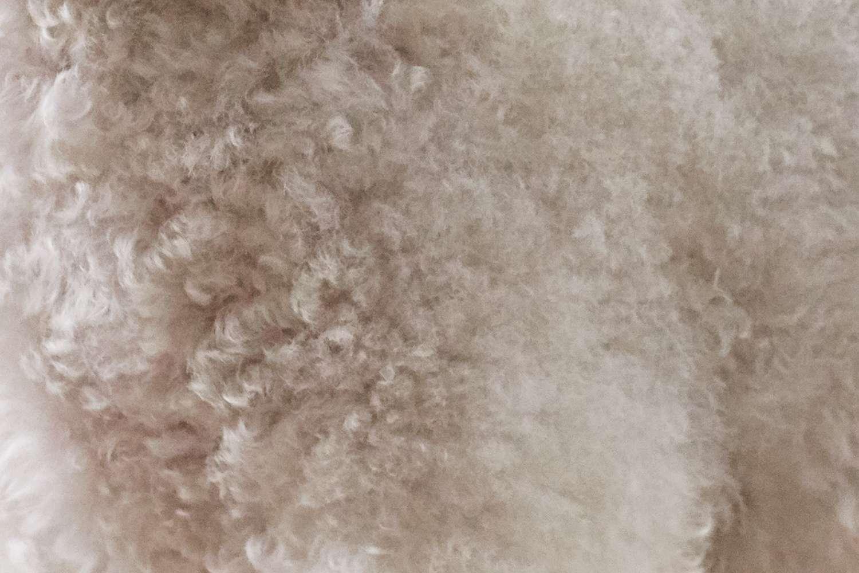 Primer plano de la piel de un Bichon Frise