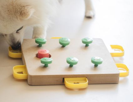 dog playing with a treat puzzle