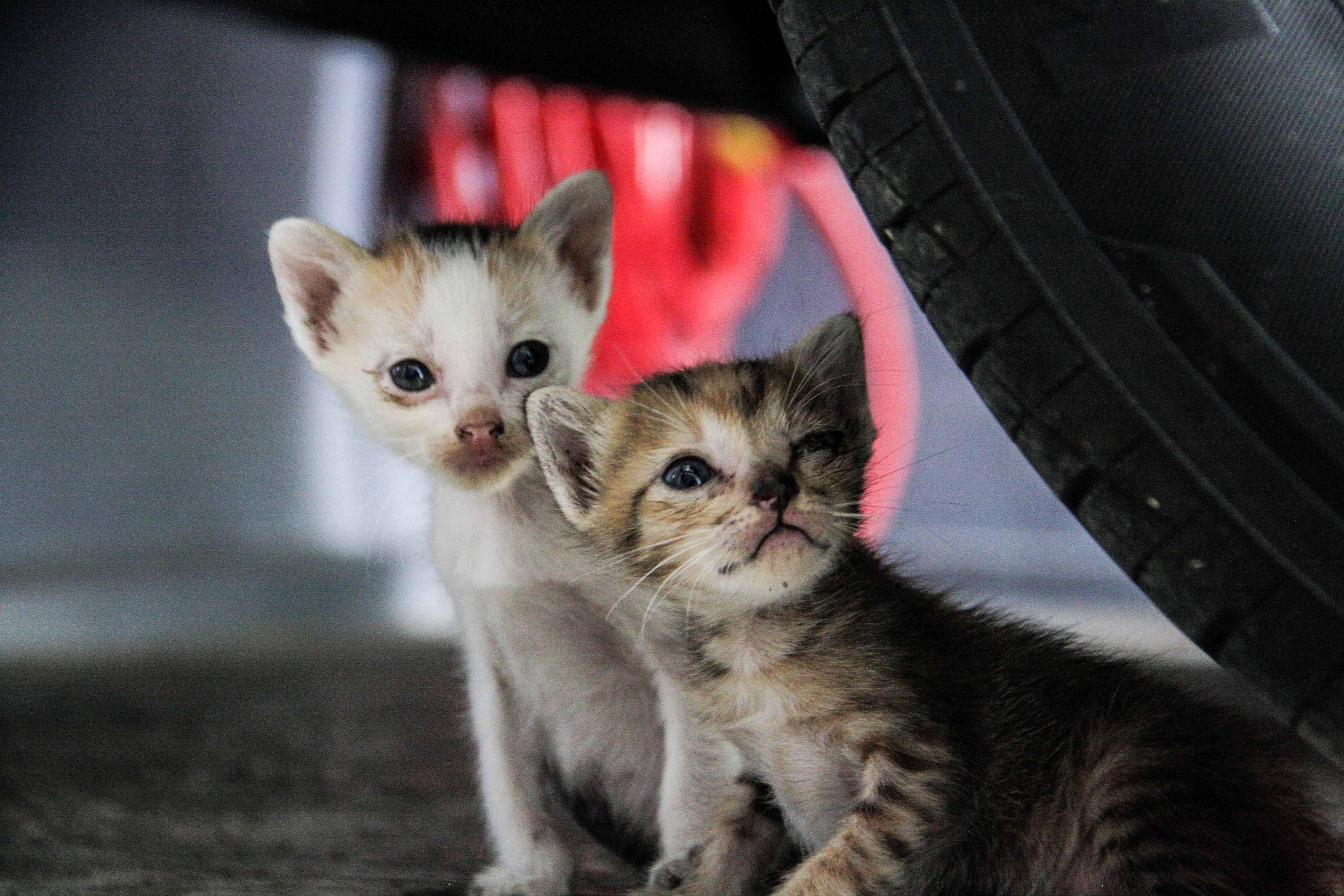Close-Up Of Kittens Below Car