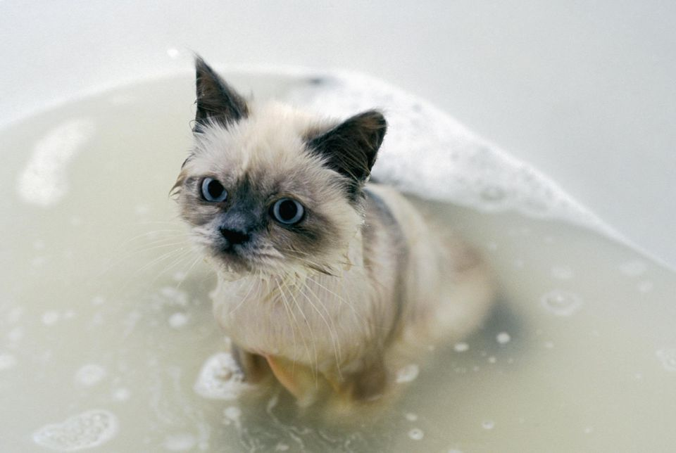 Angry kitten in a bathtub