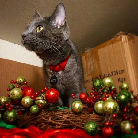 cat christmas ornaments and wreath
