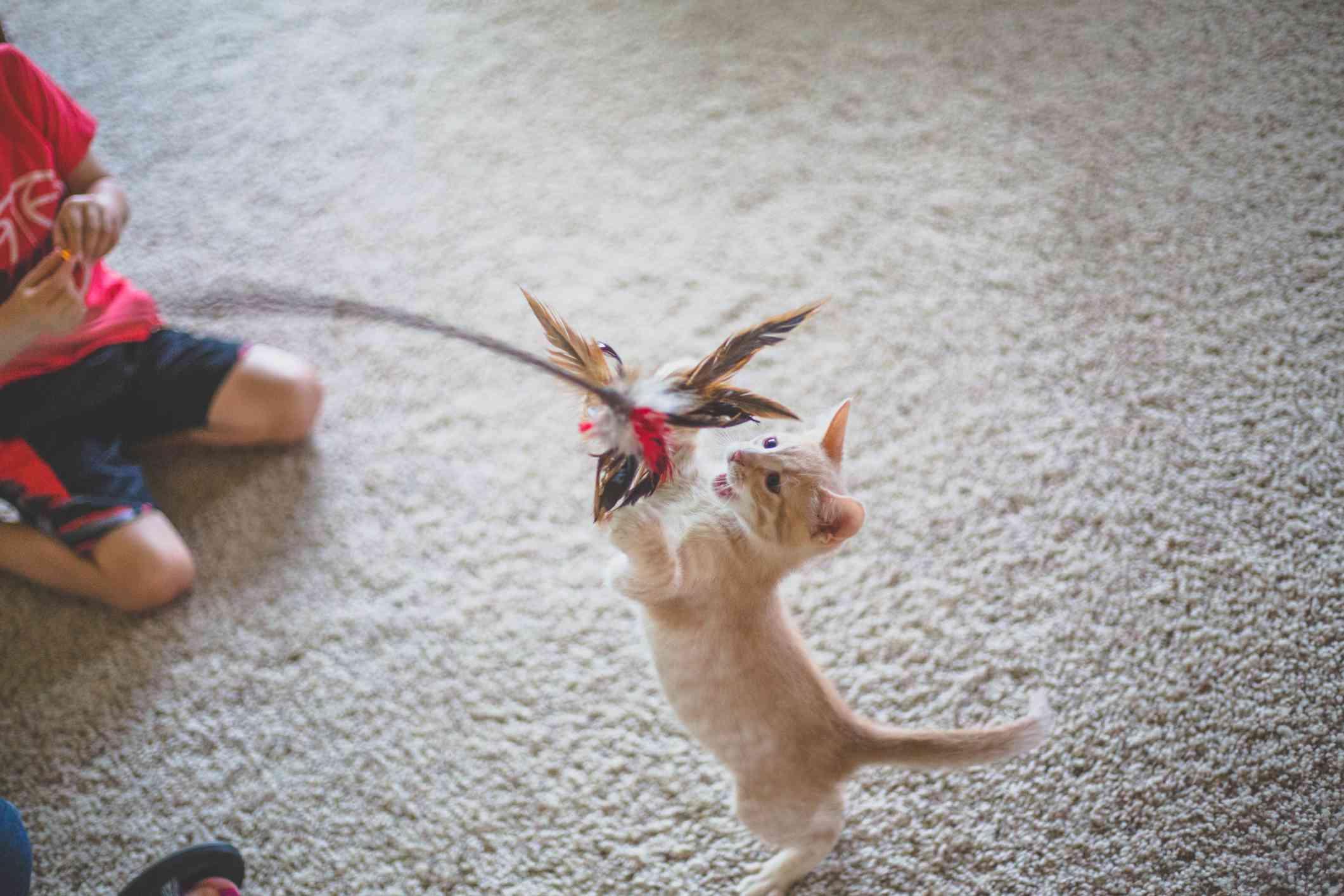 kitten scratching a cat toy