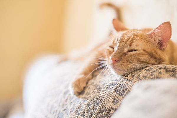 Orange tabby lying on furniture with eyes closed