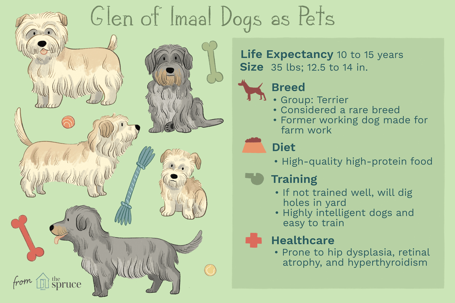 glen of imaal dogs as pets illustration