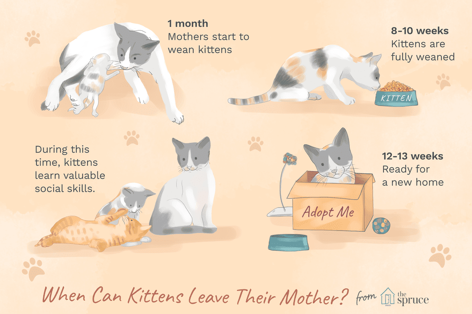 when can kittens leave their mother?