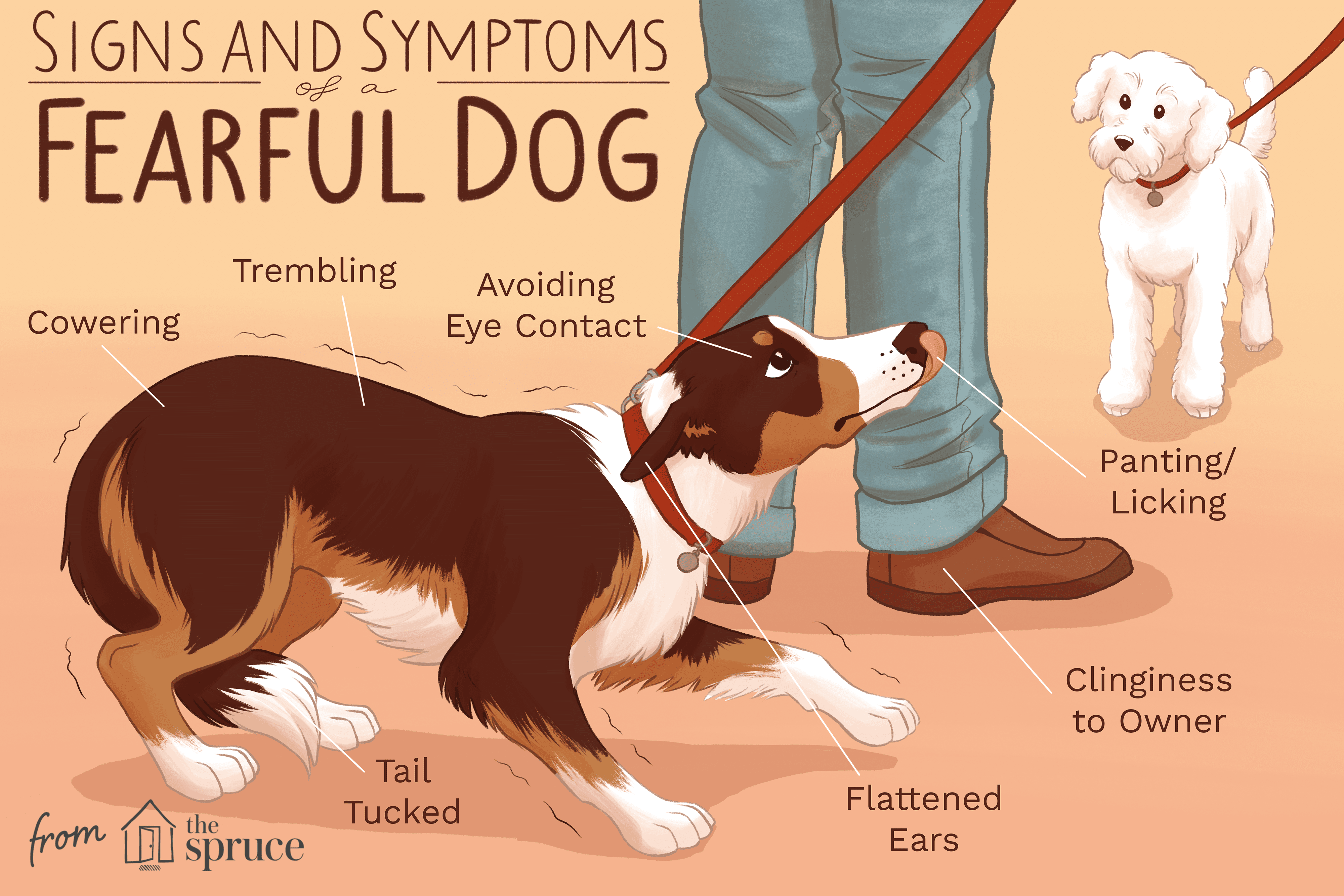 signs and symptoms of a tearful dog illustration