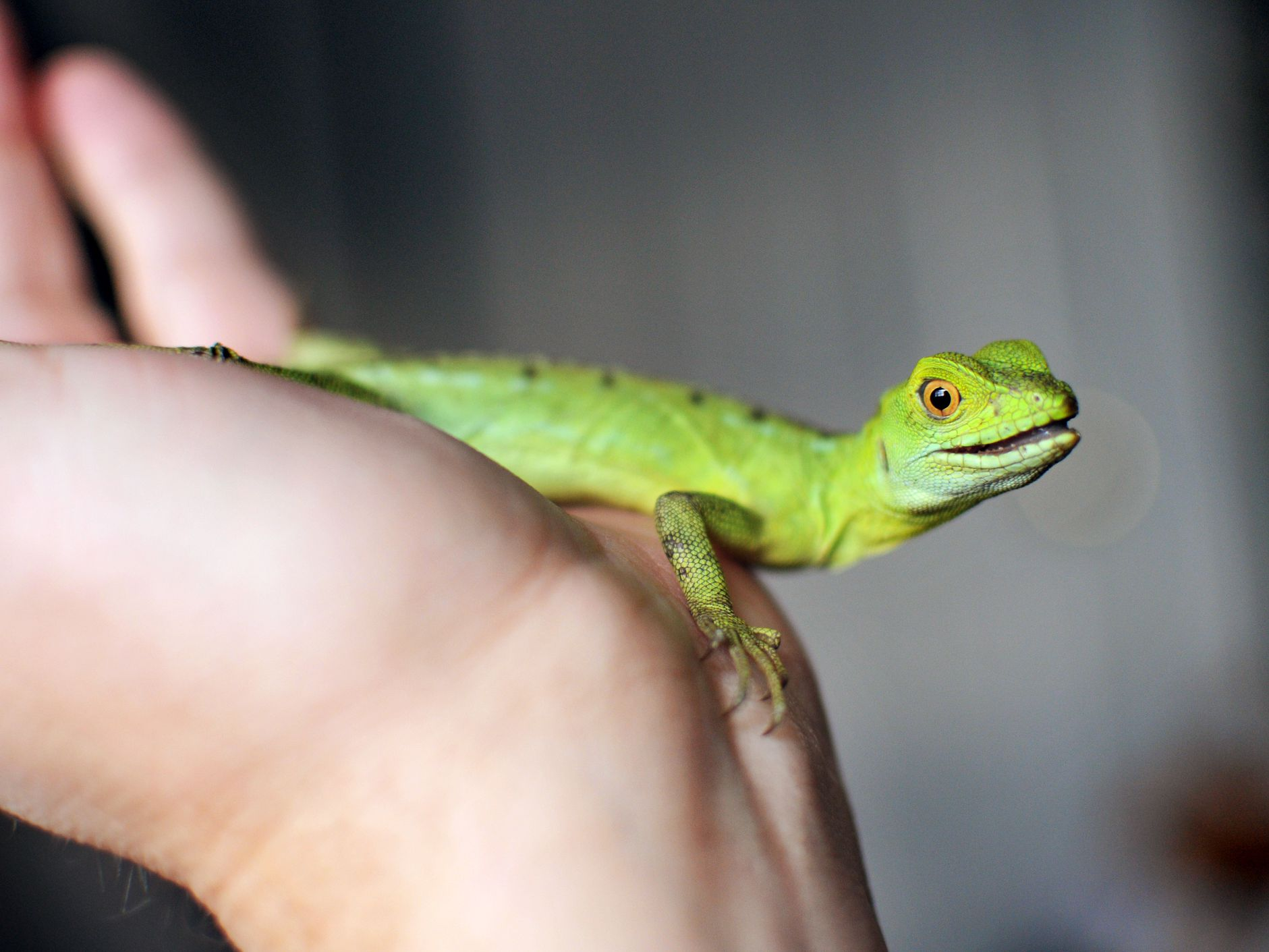 How to Choose and Care for a Pet Lizard