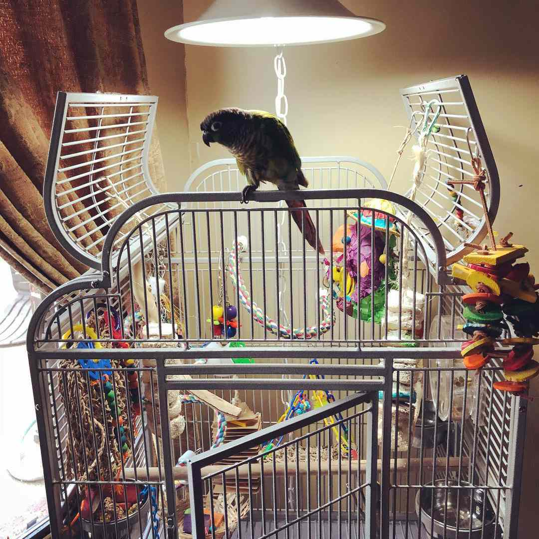 A bird perched on a large cage.