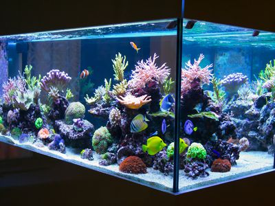 led lighting for your freshwater aquarium pros and cons